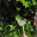 Niepłynność mowy skutkiem niepłynności oddechowej