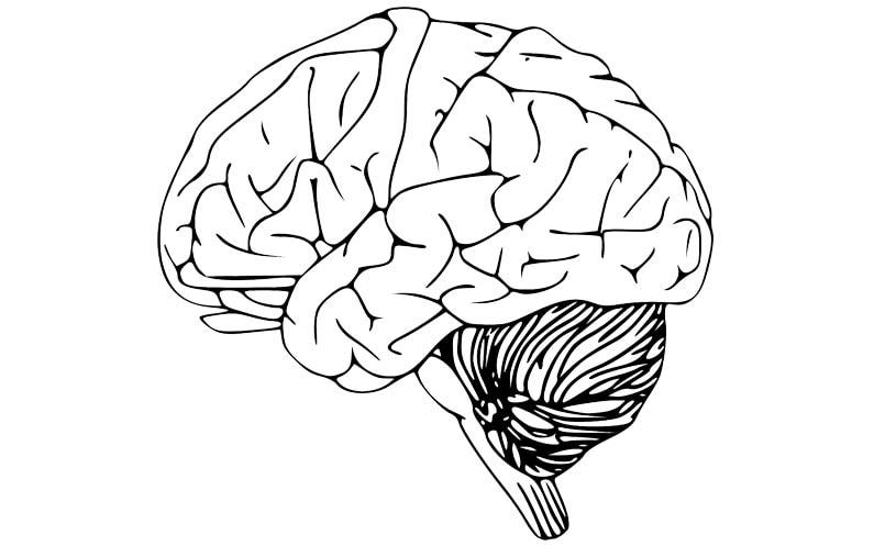 Uszkodzenie móżdżku – czy zmiany są nieodwracalne?
