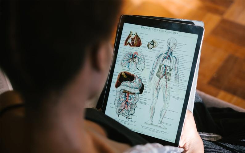 Czy znajomość anatomii jest konieczna w zawodzie logopedy?