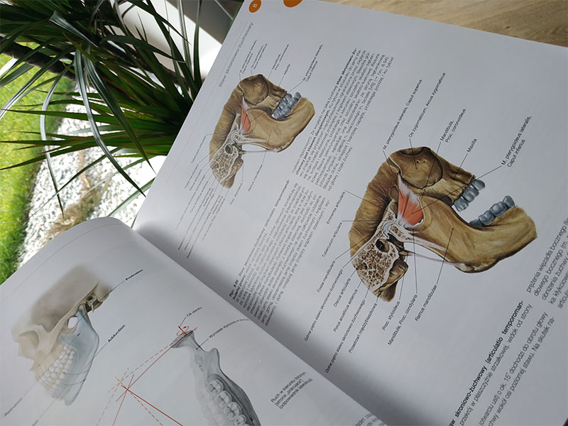 Książka o anatomii - staw skroniowo-żuchwowy
