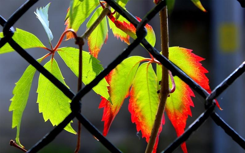 Wrzesień z punktu widzenia logopedy